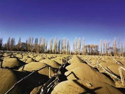 """敦煌万亩沙漠防护林被毁:生态保护不能留""""隐秘的角落"""""""
