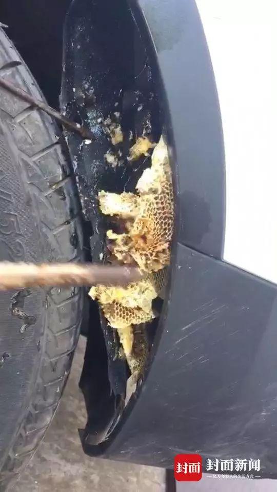 男子刚买的车里竟然藏着一大坨蜂巢 4S店的回复亮了