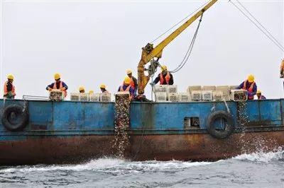 ▲獐子岛深海养殖区  图片来源:新京报