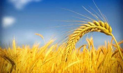 刘晓春:农村金融的迷茫与破题