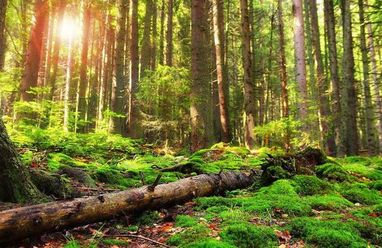 北京应建设若干城市森林公园