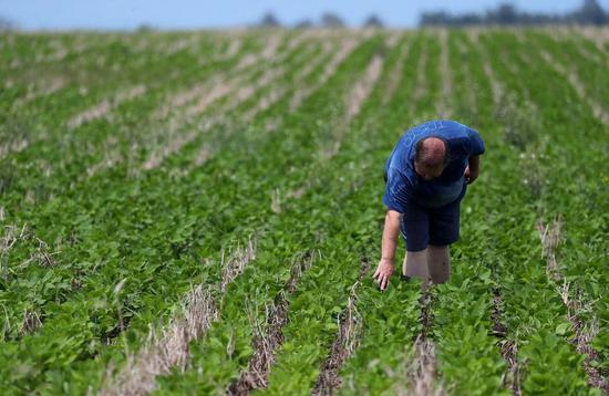 中国将向最大豆粕出口国阿根廷开放市场