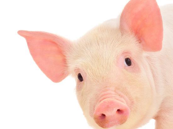 地区价差看全国生猪产能下降幅度