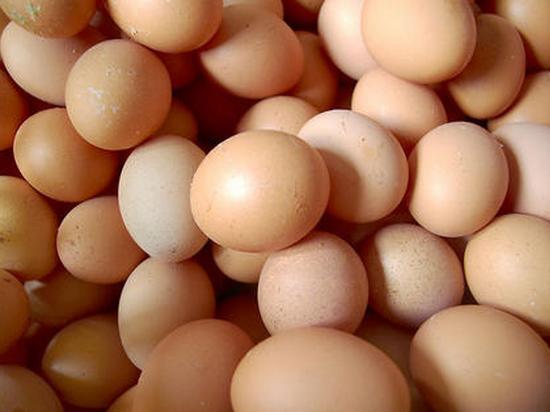 鸡蛋现货稳期货涨 饲料支撑再度增强