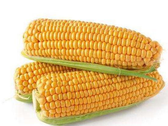 玉米期货延续筑底走势 禽料或将成为玉米需求新方向