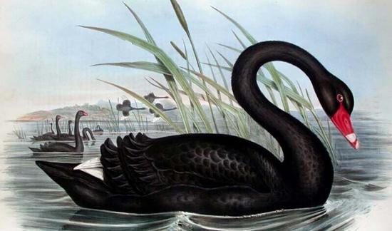 神秘的信威黑天鹅正在摧毁A股