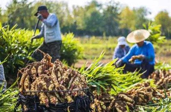 """姚洋:小农经济未过时,不该背""""恶名"""""""