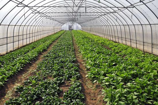 有机农业很难成中国农业主流