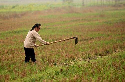韩俊:我国农业发展也有结构性矛盾
