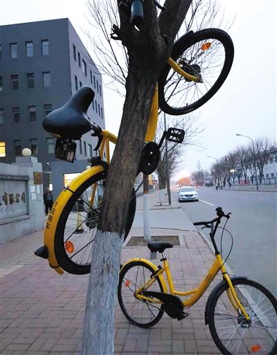 3月19日,北京昌平城区,一辆ofo单车被挂在树上。