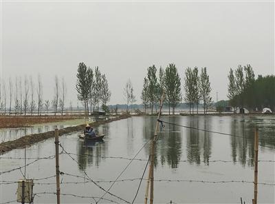 藻乍淀的藕田旁边,两个年轻人正划着一艘小木船打捞小龙虾。 A14-A15版摄影/新京报记者 王婧祎
