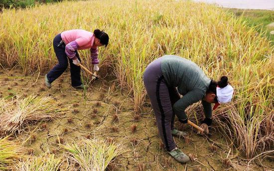 周天勇:《土地管理法》对农民极不公平!
