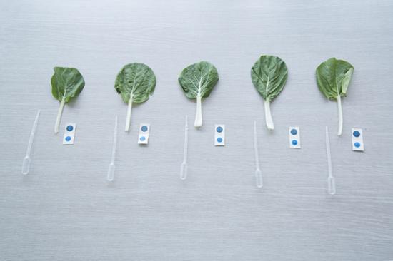 未经处理菜叶实验结果显示蓝色,即农残未超标