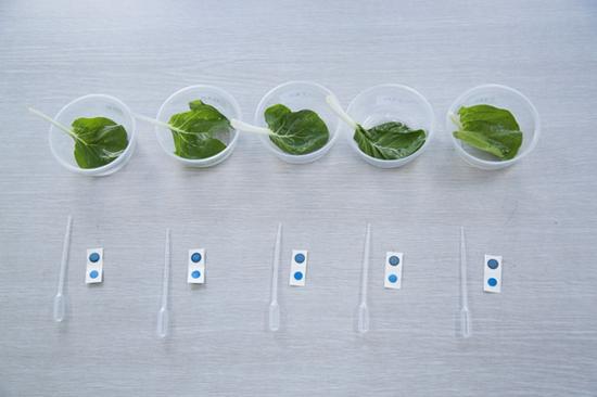 各溶剂清洗后菜叶样品农残测试(阴性)