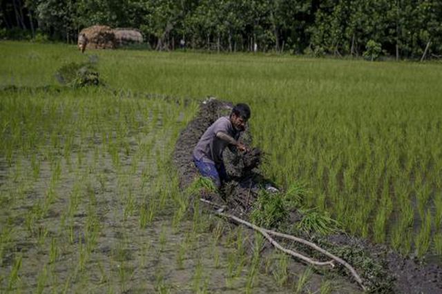 陈锡文:高度重视农民收入的稳定增长
