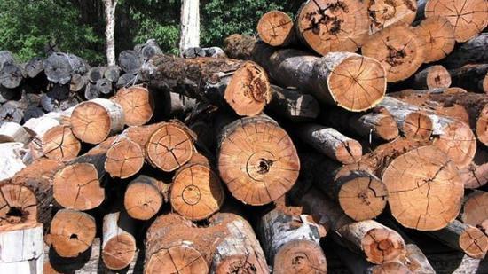 大祸中的小福 木材价格在加拿大BC省大火后上涨