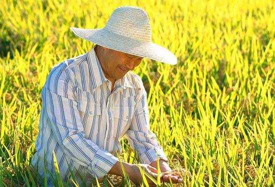 2012中国农业人口比重_蔡昉:中国人口还有可挖掘潜力应继续减少农业人口