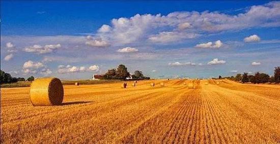 蒙格斯:提升收购价格 补足三农短板