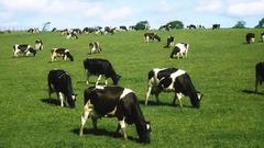 中國奶粉為什么總出質量問題?