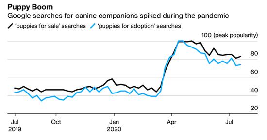 《【摩登4app注册】美国疫情经济奇景:任意一只宠物狗 至少价值5千美元》