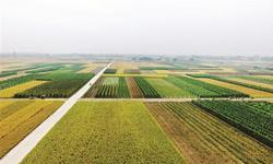 许善达:我国农业重回规模化发展之路