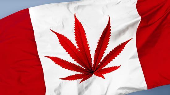 百威英博将于下周在加拿大推出含大麻二酚茶饮
