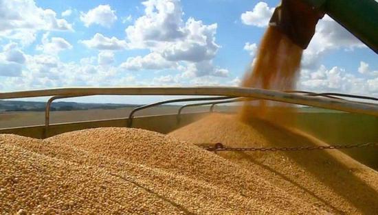 中国需求令巴西农民弃甘蔗种大豆良威棋牌