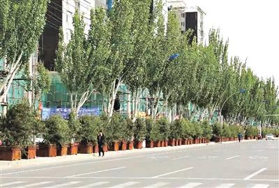 """呼和浩特赛罕区""""拍脑门""""造绿欠下巨债 企业垫资种树被拖垮"""