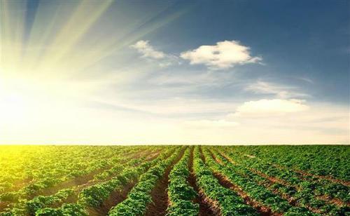 周天勇:该不该给农民真正的土地使用财产权?