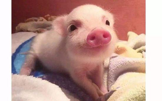 沈建光:猪周期开启通胀上行趋势