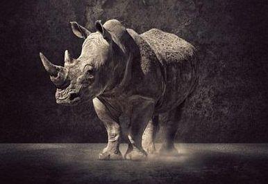 沈建光:市场风暴预警灰犀牛风险