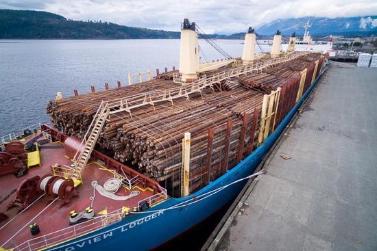 日本去年木材出口猛增逾三成 40%出口至中
