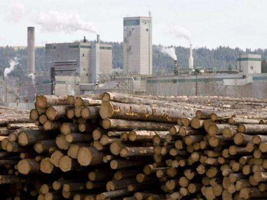 美公布软木和木材征税最终协议 引起加拿大激烈反对
