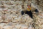 宣威火腿厂年销售2亿 用盐75吨