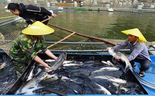 晋江:嫌自己的渔船开太慢 四男子合伙盗电池