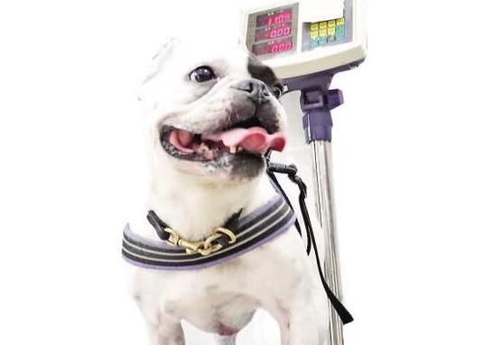 厦门:养狗办证引发热议 1秒植入微芯片无痛无害