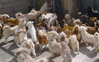 厦门最大民间流浪狗救助站将散