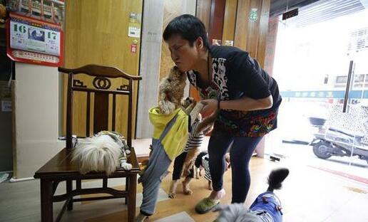 晋江暖心阿姨30年收养上百条流浪狗 几乎花光积蓄
