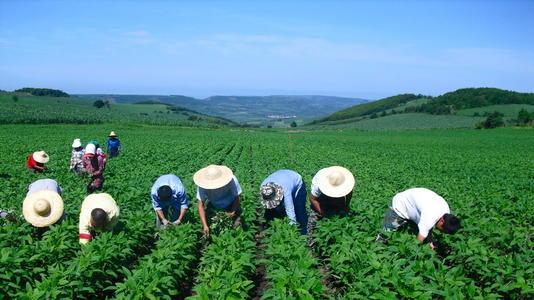 促进农民专业合作社规范管理 泉州将评选30家市级示范社