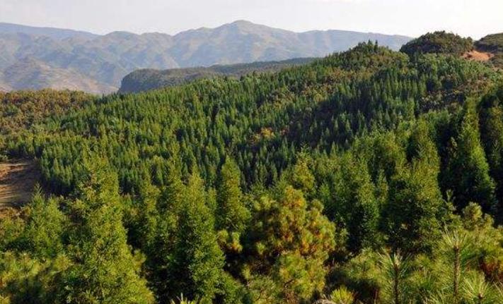明年星际网址将植树造林90万亩 封山育林200万亩