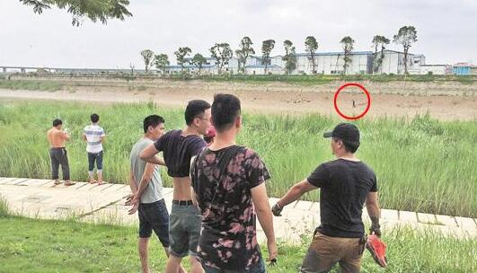 殴打八旬阿婆后跳入晋江 警民水陆包抄擒行凶男