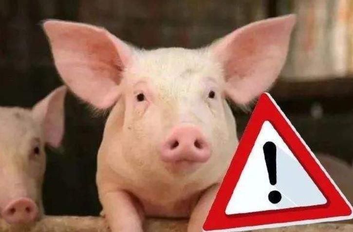 福建南平发现非洲猪瘟疫情:已启动二级响应