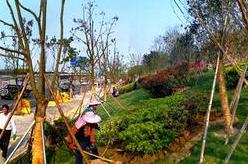 福州南二环将新增万棵树 林荫快速通道月底基本建成