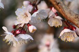 南铁清明定制3条专属线路 赏花、寻根、红色游