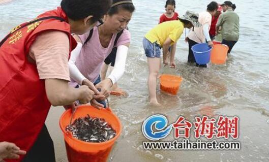 厦门海域生态环境良好 贝类质量好市民可放心吃