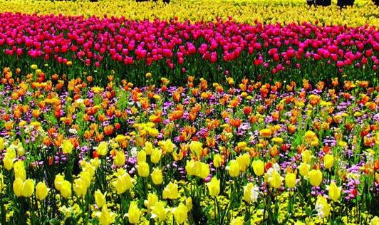 漳州将举办首届花卉电商O2O展 将设立30个标准展位