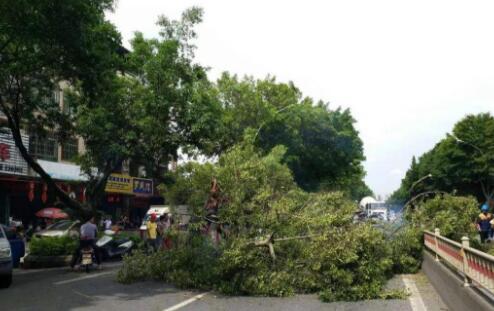 厦门暴雨一行道树倒下 砸中送餐员致脑出血还骨折