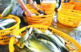 伏季休渔在即有人忙着囤海鲜 实际上这些鱼供应充足