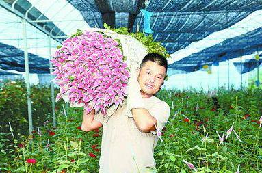 厦门岛外玫瑰花种植基地忙 本地花批发价涨6倍多