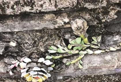 漳州诏安发现距今434年剪瓷雕 在明代万历年间雕刻